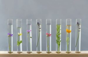 a row of test tubes on a wooden rack containg plants and flowers